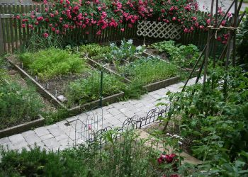 Home Gardening Tips To Help You